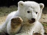 Медвежонок Кнут